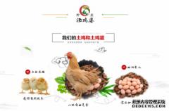 柠农农业提供生态跑山鸡鸡蛋